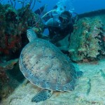 Things to do on Anguilla diving
